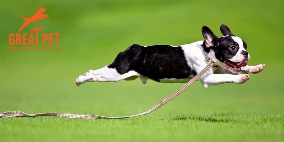 """Seminaras """"Nevaldomas šuo, arba kaip gyventi su nenuorama"""" Klaipėda"""